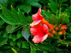 /Flores Para Ti