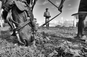 Fotojornalismo/A luz se insinuou sobre os beirais