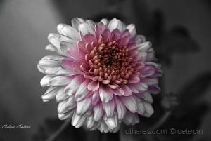 /Uma flor.