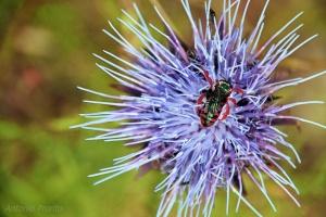 Macro/manjar dos...Insectos