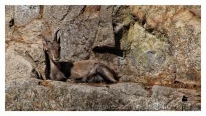 Animais/No seu habitat