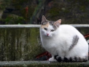 Animais/stray cat ...