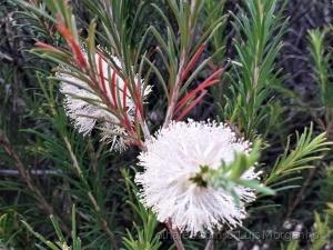 Macro/blooming