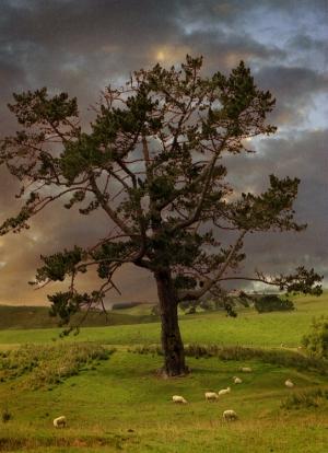 Paisagem Natural/As Ovelhas de Frodo