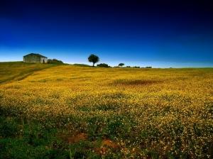 /Uma casa no campo