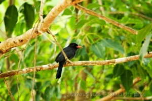 Outros/O pássaro do bico encarnado