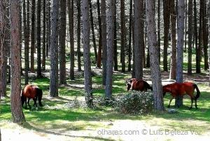 Paisagem Natural/Parque Nacional