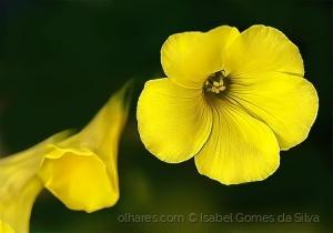 Outros/Amarelas