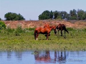 /Cavalos à Solta