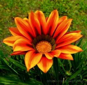 /Trouxe Uma Flor Para Ti !