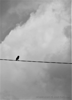 Animais/Today my soul is sad like a little lonely bird .