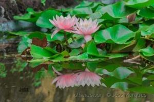 Paisagem Natural/Lotus