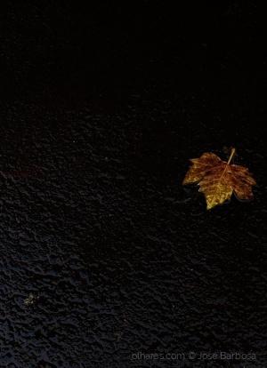 /a pequena folha de Outono que iluminou a escuridão