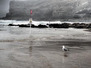 Gentes e Locais/Na praia com nevoeiro