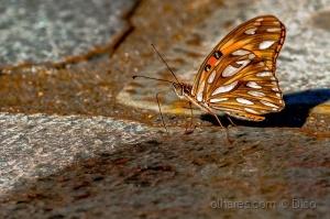 /Fantastic butterfly
