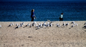 Gentes e Locais/Viver a vida passeando a beira mar........