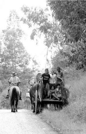 Gentes e Locais/Pelas Estradas das Minas Gerais