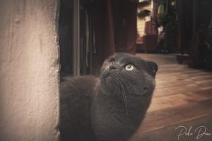 Animais/Firenze Cat