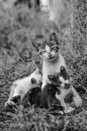 Animais/Mãe