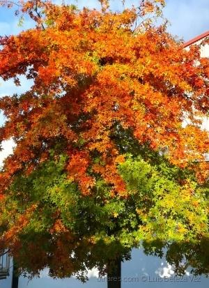 Paisagem Natural/Chegou o Outono