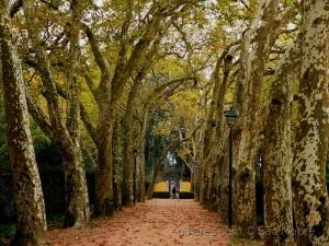 /Rua dos Plátanos - Outono