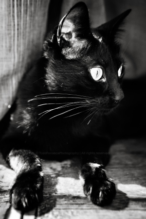 Outros/Little panther!