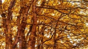 Outros/Cada ramo vem de um tronco