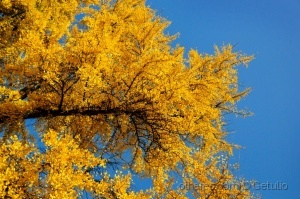 Outros/yellow leaves