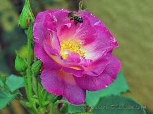 Macro/The Nectar Collector...