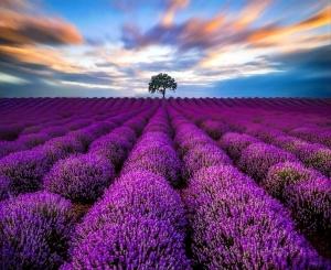 Paisagem Natural/Purple Lines
