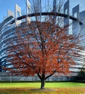 Paisagem Urbana/Parlamento Europeu