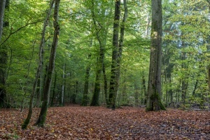 Paisagem Natural/In the woods 2