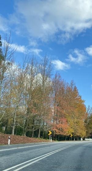 Paisagem Natural/Adeus Outono