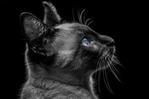 Outros/Blue