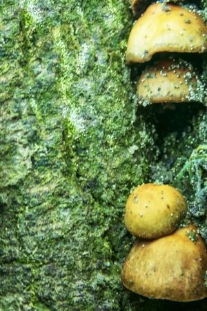 Paisagem Natural/ small mushrooms in the garden