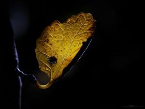 Paisagem Natural/(...) coração que desenhas